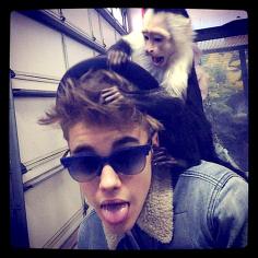 bieber-monkey