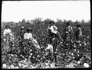 slaves-in-field